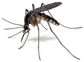 Man Up Against Mosquito's Thumbnail