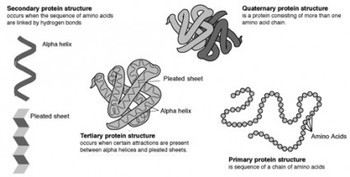 Protein Thumbnail