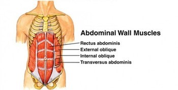 Research and our Rectus Abdominis Thumbnail